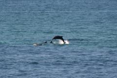 Goodtimes-Surfcamp-Surfen-25